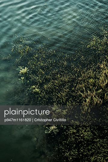 Wasserpflanzen - p947m1161820 von Cristopher Civitillo