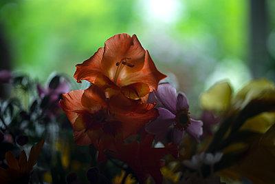 Blumen - p427m1109655 von Ralf Mohr