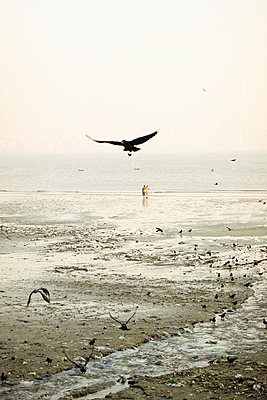 Birds at Chowpatty Beach - p4902769 by Jan Mammey