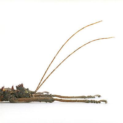 Insekt - p6060141 von Iris Friedrich
