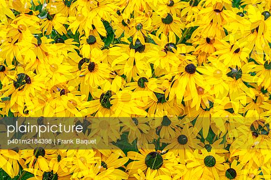 Garden monkshood - p401m2184398 by Frank Baquet
