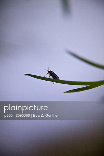 Insect on blade of grass - p580m2090366 by Eva Z. Genthe