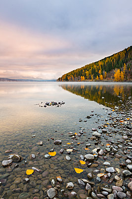Sunrise on the shore of Lake McDonald, Glacier National Park, Montana, United States of America, North America - p871m2113652 by Jordan Banks