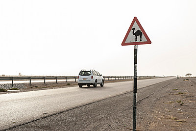 SUV moving past road sign alerting drivers to presence of camels - p623m874394f by Thierry Foulon