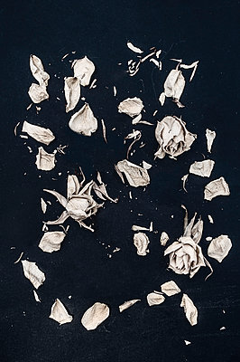 Wilted roses - p971m1492649 by Reilika Landen
