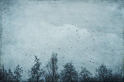 Germany, Wuppertal, Flock of birds flying over bare forest trees in winter - p300m2143547 by Dirk Wüstenhagen