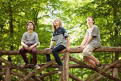Drei Freunde im Wald - p1195m1138120 von Kathrin Brunnhofer