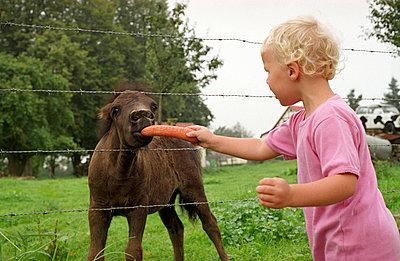 Foal - p1610025 by Kerstin Schomburg