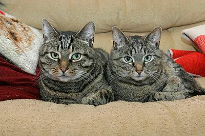 Stubenkatzen - p1650390 von Andrea Schoenrock