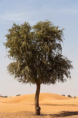 Einzelner Baum in der Wüste - p280m1137317 von victor s. brigola