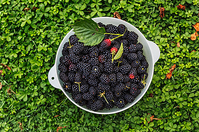 Bowl with blackberries - p312m2080084 by Pernille Tofte