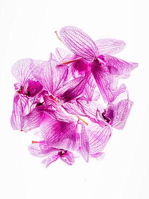 Orchideenblüten - p401m2193038 von Frank Baquet