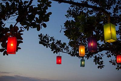 Lampions im Baum III - p586m859176 von Kniel Synnatzschke