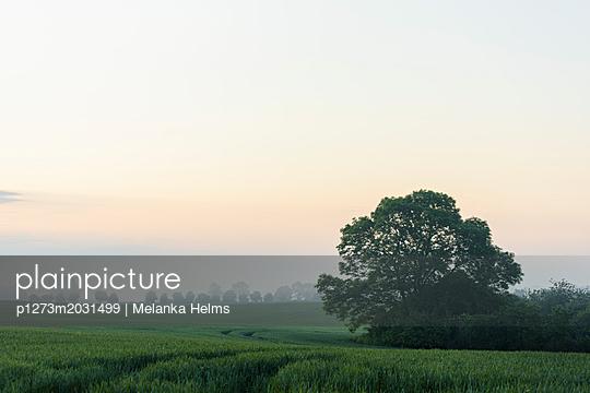 Morgenrot über einer Feldlandschaft - p1273m2031499 von melanka