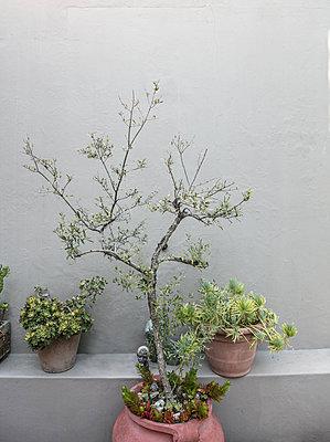 Plants against Grey Background - p1082m2071341 by Daniel Allan