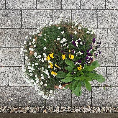 Bepflanzung im öffentlichen Raum - p1401m2263641 von Jens Goldbeck