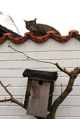 Vogelhaus von Katze bewacht - p264m793343 von André Bitter