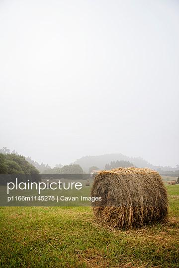 p1166m1145278 von Cavan Images