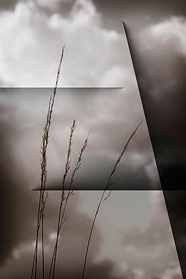 Cut grass - p1228m2116339 by Benjamin Harte