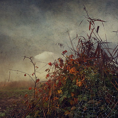 Ghostland III - p1633m2208933 by Bernd Webler
