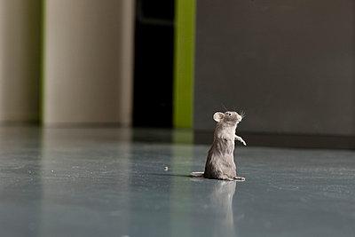 Mäuschen - p7510022 von Dieter Schwer