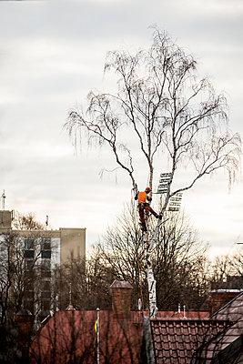 Man cutting tree branches - p312m1472627 by Fredrik Schlyter