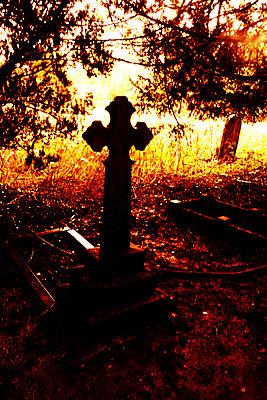 Gravestones in overgrown cemetery - p597m2277966 by Tim Robinson