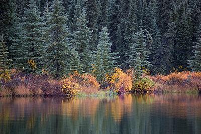 Taiga in autumn along Wonder Lake, Denali National Park, Alaska - p884m1510099 by Matthias Breiter