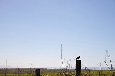 Bird in front of landscape - p956m1044260 by Anna Quinn