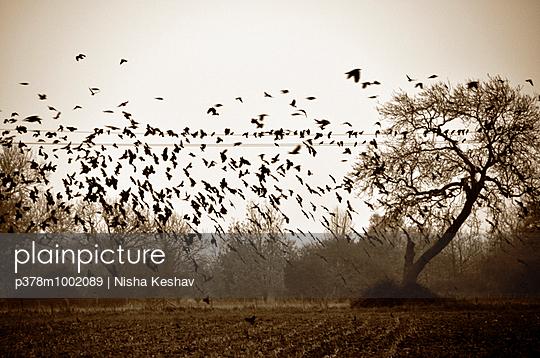p378m1002089 von Nisha Keshav