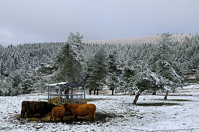 Bison herd - p1105m2134533 by Virginie Plauchut