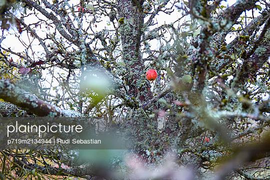 p719m2134944 by Rudi Sebastian