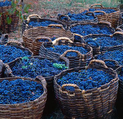 Körbe mit Weintrauben  - p979m1035106 von Andreas Grigoleit