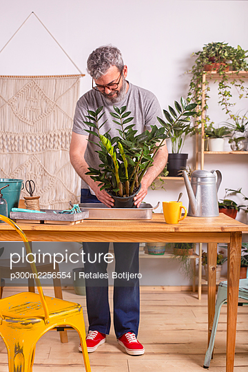 Man gardening Zamioculcas Zamiifolia plant while standing by table at home - p300m2256554 by Retales Botijero