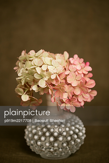 Yellow and pink hydrangeas in glass vase against brown background - p919m2217708 by Beowulf Sheehan