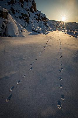 Animal tracks in Arctic snow - p343m1184604 by Paul Zizka