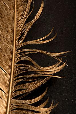 Golden feather - p451m901763 by Anja Weber-Decker