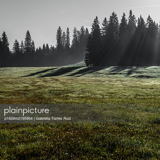 Meadows and forest in the sun, Dolomites - p1624m2195954 by Gabriela Torres Ruiz
