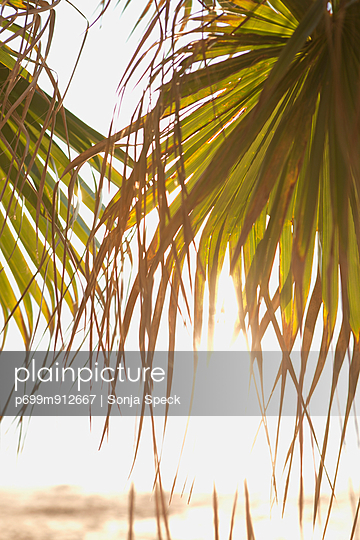 Palm Leaf - p699m912667 by Sonja Speck