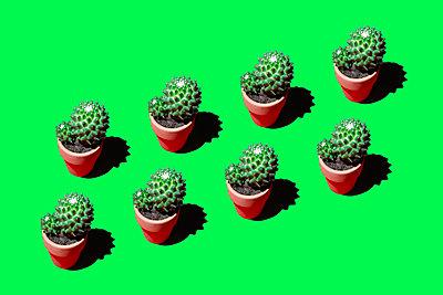 Cacti - p1149m2031290 by Yvonne Röder