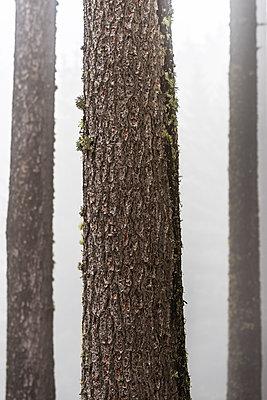 Wald - p488m1087603 von Bias