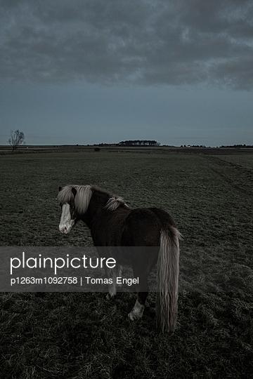 Pony Amrum - p1263m1092758 von Tomas Engel