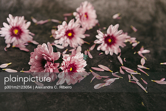 Pink flowers and petals - p301m2123054 by Alexandra C. Ribeiro