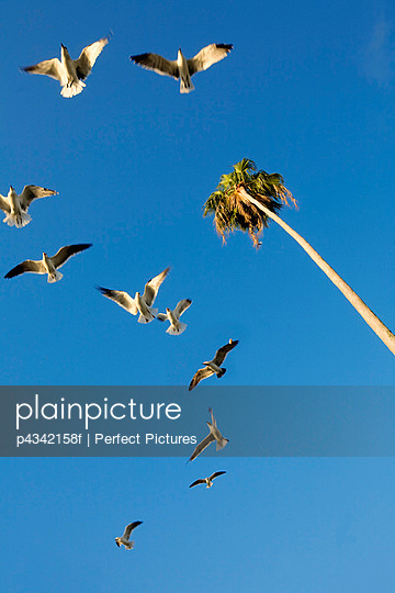 Flock of birds flying in sky with palm tree, low angle view