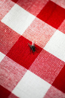 Fliege - p1094m1015329 von Patrick Strattner