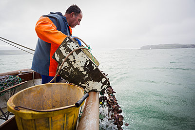 Traditional Sustainable Oyster Fishing, River Fal. A fisherman tipping shells into the water.  - p1100m1216021 by Mint Images
