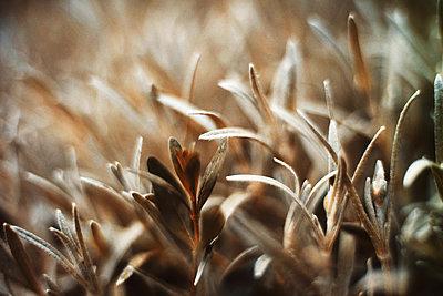 Newborn fresh leaves - p1166m2095247 by Cavan Images