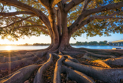Tree at Mission Bay Park - p1436m1588843 by Joseph S. Giacalone