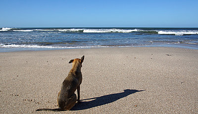 Dog on beach - p162m1025640 by Beate Bussenius