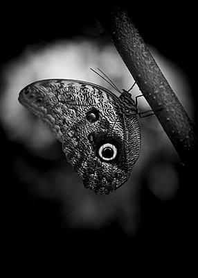 Butterfly - p552m2164141 by Leander Hopf